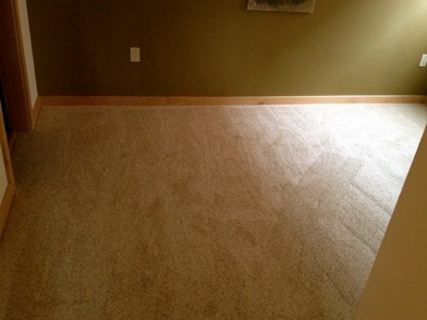 Remove cat pee permanently from carpet